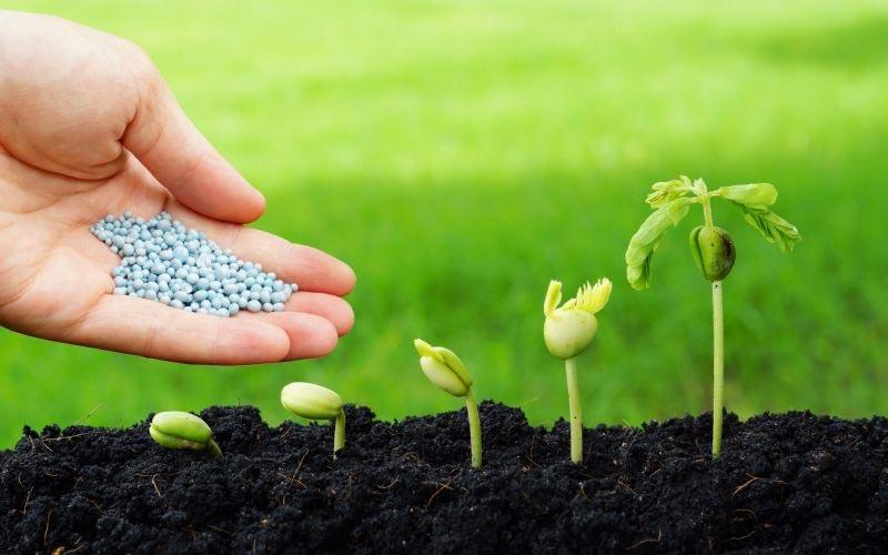 Вред нитратов и пестицидов
