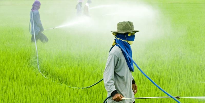 Пестициды и нитраты