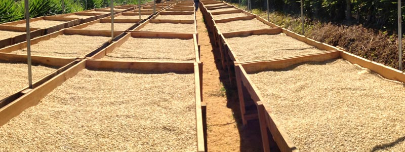 Сухая обработка зерна